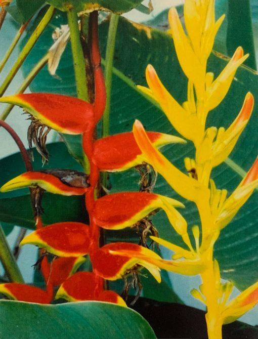 Note Card Peruvian Bloom